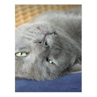Relax! Grey Purring Cat Postcard