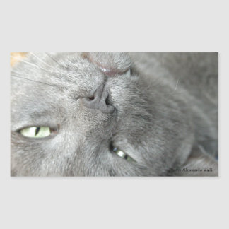 Relax! Grey Purring Cat Rectangular Sticker
