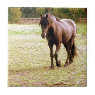 Relaxed Brown Horse Walking Tile