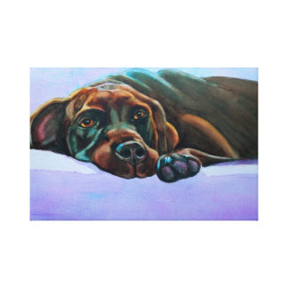 Relaxed Chocolate Lab Canvas Print