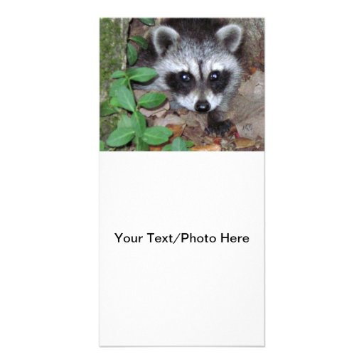 Relaxed Raccoon Customized Photo Card