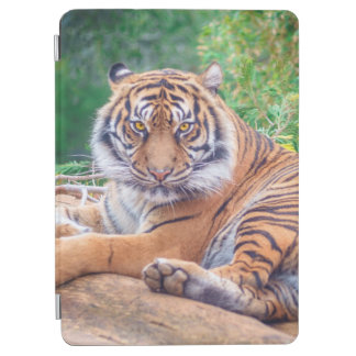 Relaxed Reclining Tiger iPad Air Cover