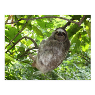 Relaxed Sloth in Nature Postcard