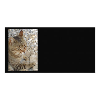 Relaxed Tabby Cat Against Stones and Pebbles Photo Card Template