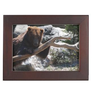 Relaxing Brown Bear Memory Boxes