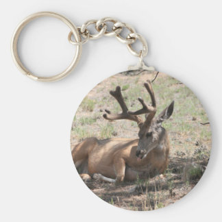 Relaxing Buck Basic Round Button Keychain