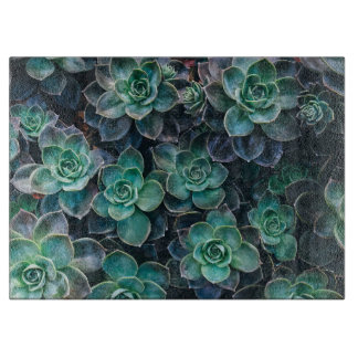 Relaxing Green Blue Succulent Cactus Plants Boards