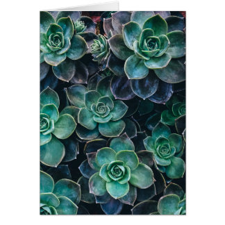 Relaxing Green Blue Succulent Cactus Plants Card