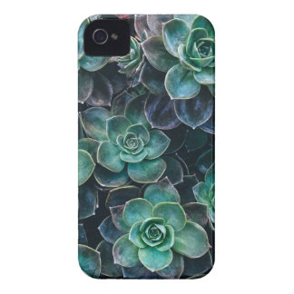 Relaxing Green Blue Succulent Cactus Plants iPhone 4 Cases