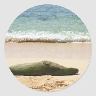 Relaxing Monk Seal