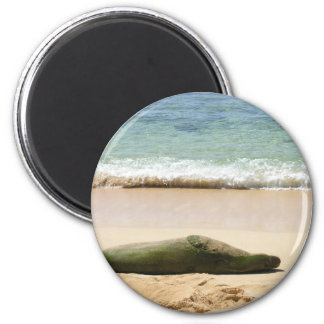 Relaxing Monk Seal 2 Inch Round Magnet