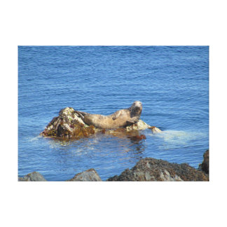 Relaxing Seal Canvas Print