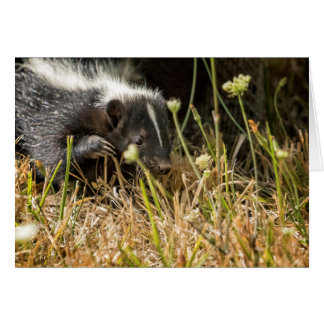 Release of A Young Skunk Card