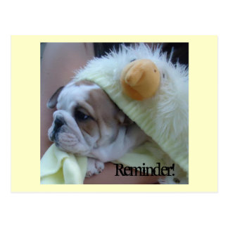 Reminder Postcards English Bulldog Puppy