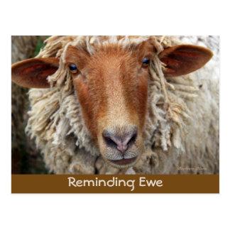 Reminding Ewe: Reminder Cards