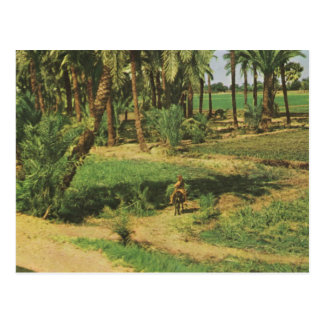 Replica  Vintage Egypt, Nile delta agriculture Postcard