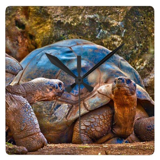 Reptile Galapagos Tortoises Wall Clock