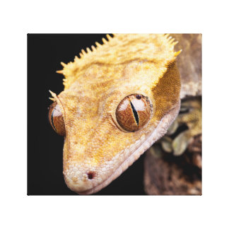 Reptile near water close up on black background canvas print