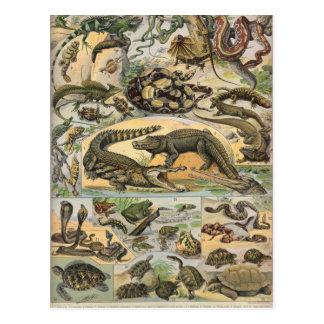 Reptiles Postcard