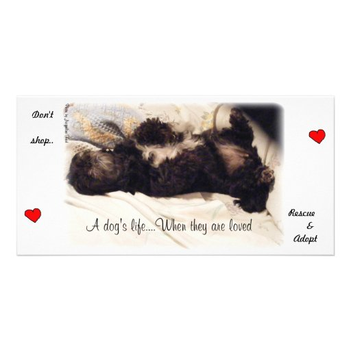 Rescue & Adopt..Don't Shop Picture Card