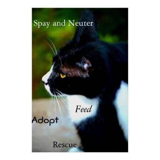 Rescue Cat poster Poster