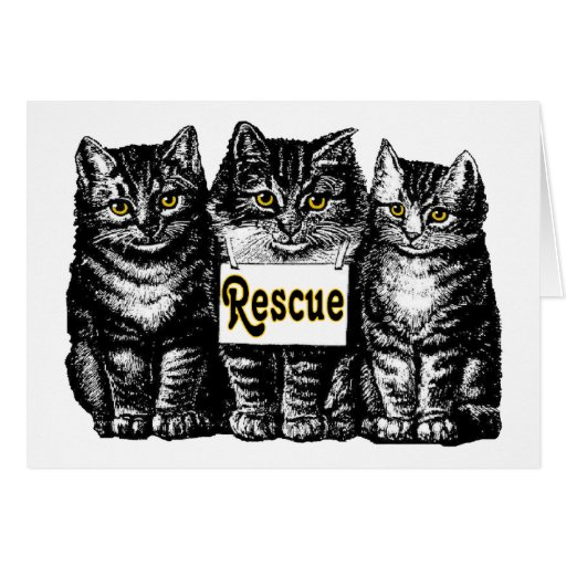 Rescue Cats Greeting Cards