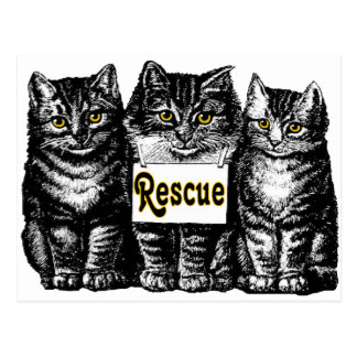 Rescue Cats Postcard