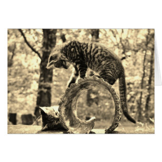 Rescue Kittens Playing on a Log Notecard Greeting