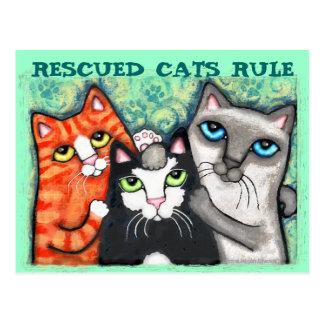 Rescued / Shelter Cat's Postcard