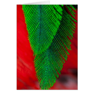 Resplendent Quetzal Feather Abstract Card