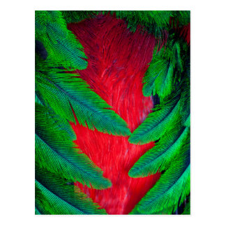Resplendent Quetzal feather design Postcard