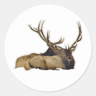 Resting bull elk classic round sticker