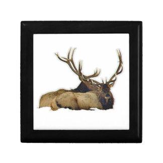 Resting bull elk gift box