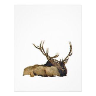 Resting bull elk letterhead