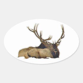 Resting bull elk oval sticker