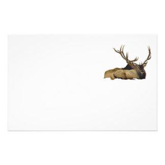 Resting bull elk stationery