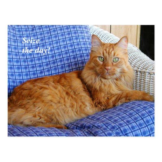 Resting Cat Post Card
