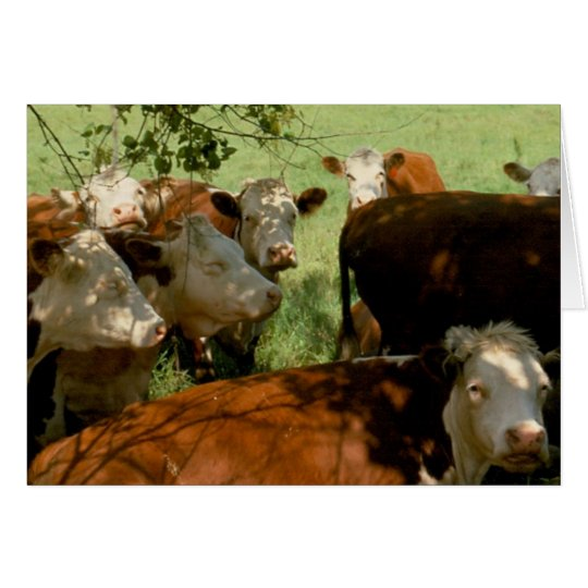 Resting Cows Card