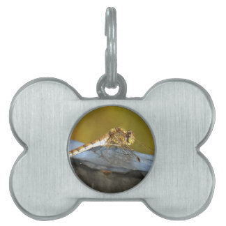 Resting Dragonfly Pet Name Tag