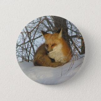 Resting Fox 2 Inch Round Button