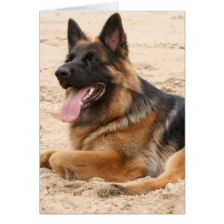 Resting German Shepherd Dog Greeting Card