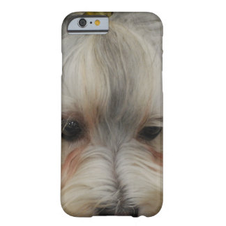 Resting Havanese Dog Barely There iPhone 6 Case
