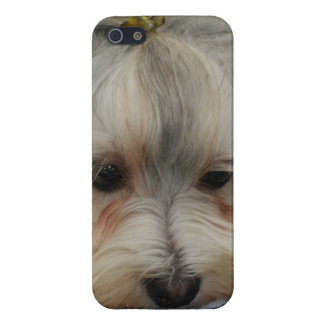 Resting Havanese Dog Case For The iPhone 5