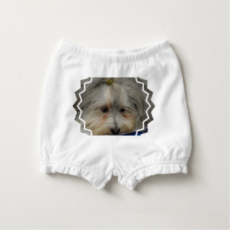 Resting Havanese Dog Diaper Cover