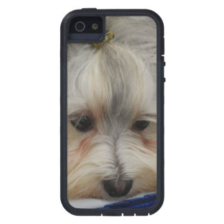 Resting Havanese Dog iPhone 5 Cover
