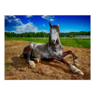 Resting Horse Poster