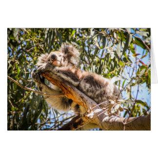 Resting Koala Card