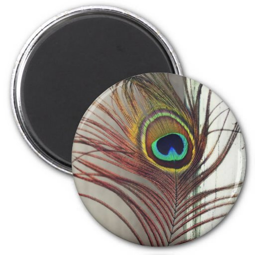 Resting Peacock Feather Refrigerator Magnets