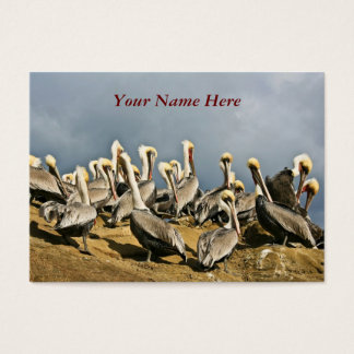 Resting Pelicans Business Card