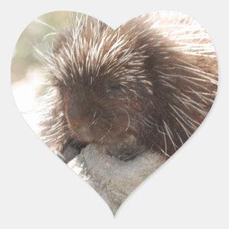 Resting Porcupine Heart Sticker